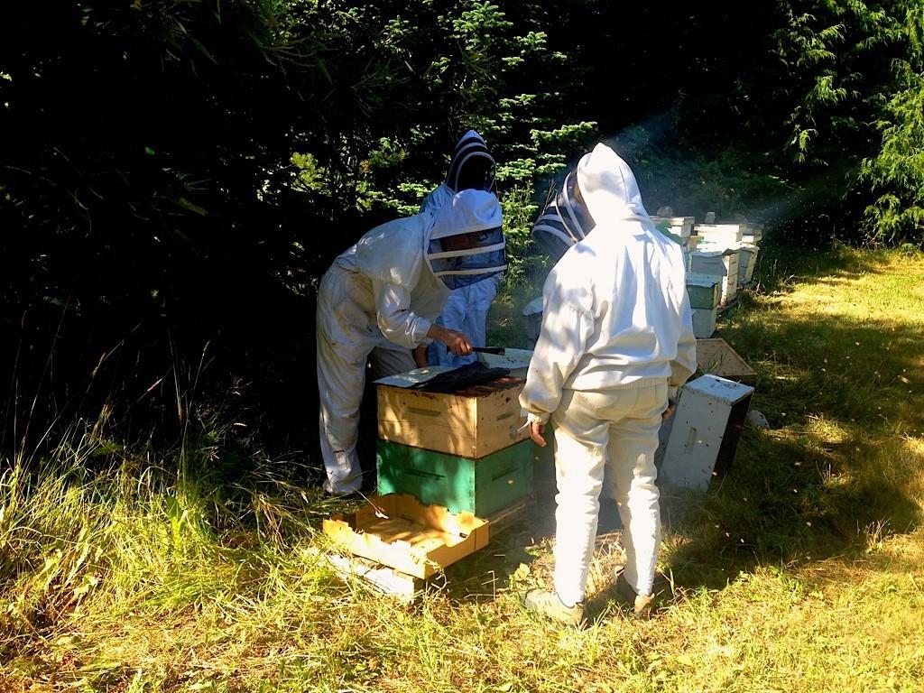 Bee IPM Team